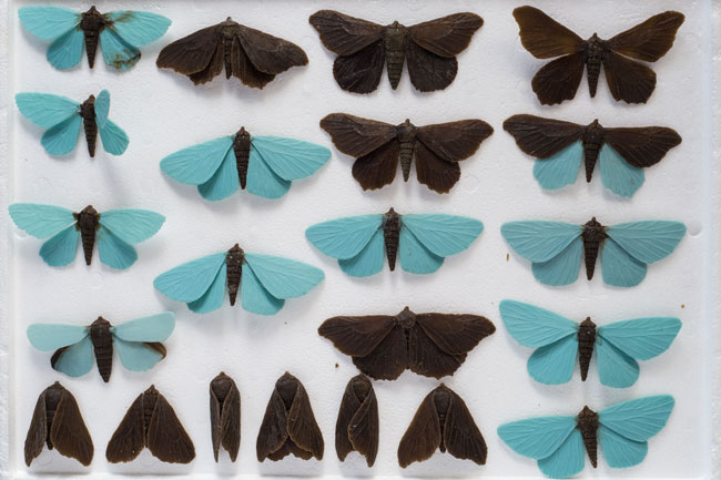 moths, Elizabeth Thomson